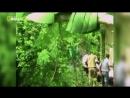 Nat Geo Wild Самые опасные убийцы Опасная зона 2013 HDTV 1080i