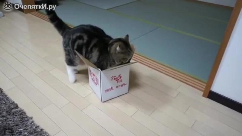 Толстый кот и коробка.