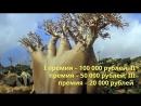 Кировчане могут получить 100 тысяч рублей за фотографию редких деревьев