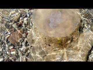 #Чистаявода#Медуза#Черноеморе#май