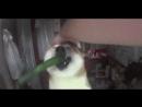 Смешное со всего света хорошее настроение юмор видео смех животные семья дорога звери мужик танцует переход кот киса