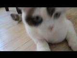 Аделина, и, кошка Буся.