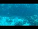 Красное море, батискаф