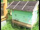 ч 2 Пчелиное Роение Фильм иллюстрация к книге Фёдора Лазутина Пчёлы в радость