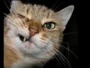 Бодливая кошка