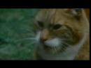 Магия мурчащих ! Мистическая История Кошки