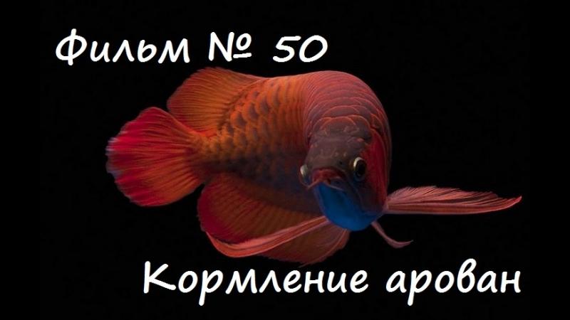 Фильм № 50 Кормление арован