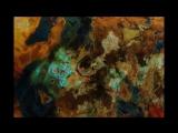 Aint Nobodys Business - Jay Mcshann (with Duke Robillard and Maria Muldaur)