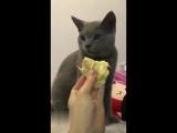 Кот и фрукт дуриан