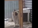 Video 4323aa873994099ed44a7dd806884913