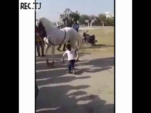 Мальчик танцует с конём классная арабская музыка