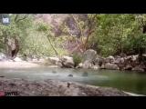 Три друга хотели снять на видео, как играют в пруду, но сняли собственную смерть