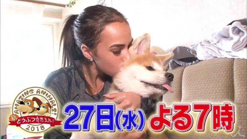 動物が好きすぎる人スペシャル 3時間版の中には 平昌オリンピック 金メダリストの アリーナザギトワ さんと愛犬 マサル も登場 新どうぶつ奇想天外 は秋田からロシアまで