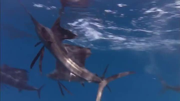 BBC Жизнь Фильм 4 Рыбы