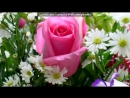 «ЦВЕТЫ» под музыку ИРИНА АЛЕГРОВА - Сднём рождения. Picrolla