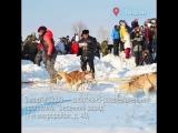 Куда пойти на выходных в Ленобласти 3-4 марта