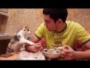 Коты всегда радовали и смешили нас