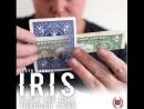 IRIS by Lloyd Barnes