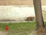 Неужели кошки замурованы в подвале общежития