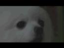 Животные - ЛУЧШИЕ РЕМИКСЫ.mp4