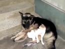 счастливая семья: собака,кошка обезьянка!