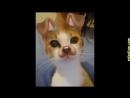 Приколы с кошками и котами . Подборка смешных и интересных видео с котиками и кошечками