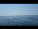 Дельфины Абхазия Багратион