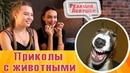 Реакция девушек - Приколы с животными №1