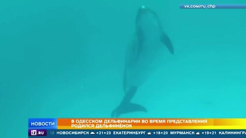 В Одесском дельфинарии во время представления родился дельфин