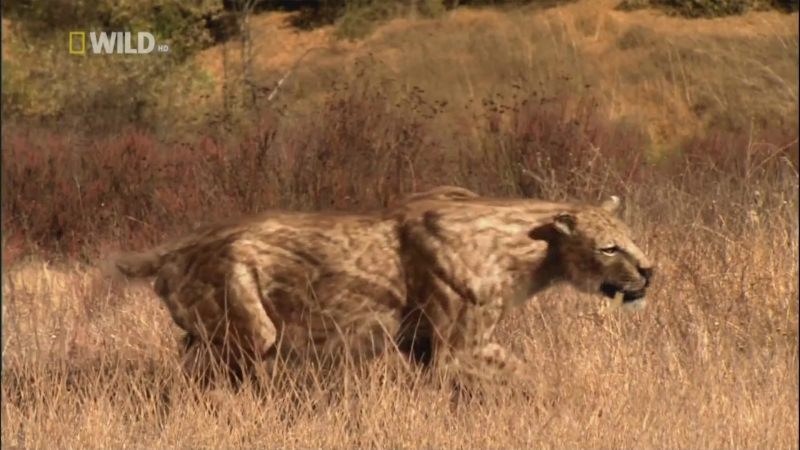 Avcılar 2- Smilidonlar