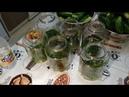 Маринованные огурцы Консервация огурцов на зиму Домашний проверенный рецепт