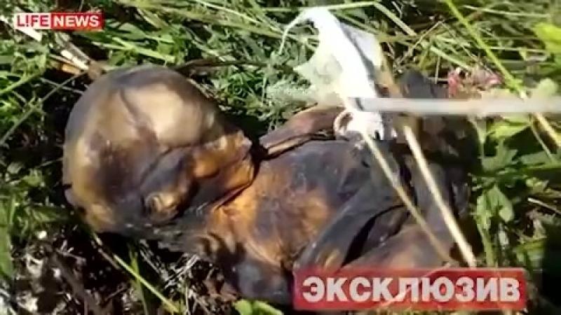 248 мертвых младенцев нашли в лесу.