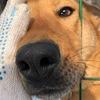 Поездки в приют для собак Солнцево