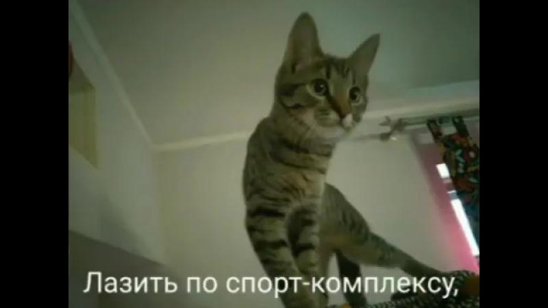 Нохрин Савелий 5г Кот Финдус