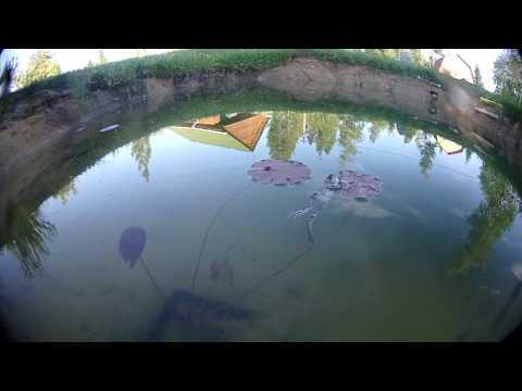 Релакс шестиногой лягушки под light drum,n,bass)