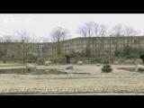 Новый год в Берлинском зоопарке