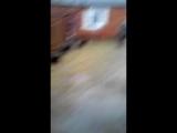 Пьяный сосед ЗАСТРЕЛИЛ собаку из охотничьего ружья