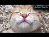 Кошки, очень позитивное и милое видео