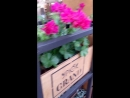 Капельный полив растений.