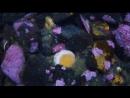 Морской огурец ужинает