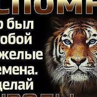 Анкета Николай Яковлев
