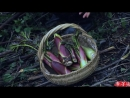 Ли ЦзыЦи - ДЕВУШКА С ХАРАКТЕРОМ! Вкусные побеги У Лун Тоу чёрный Дракон, или Шу ЖэньШэнь дерево Жизни... Поздний ужи