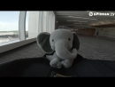 Borgore - Elefante
