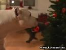 Как собаки елку наряжали