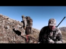 ГОРНАЯ ОХОТА НА ПИРЕНЕЙСКУЮ СЕРНУ Mountain hunting in Spain pyrenean chamois