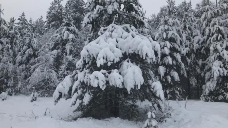 Снежная сказка в Сямозерье