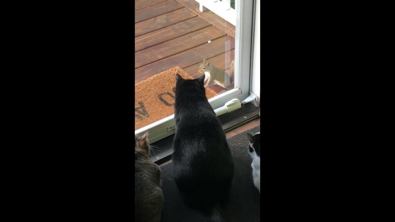 Squirrel Taunts Pack of Cats __ ViralHog