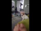Пёсик не любит когда его обижают
