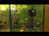 Краткий обзор моих аквариумов