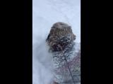 снежная зима 2018 и